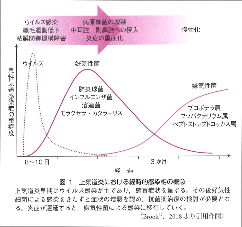 上気道炎における経時的感染相の概念